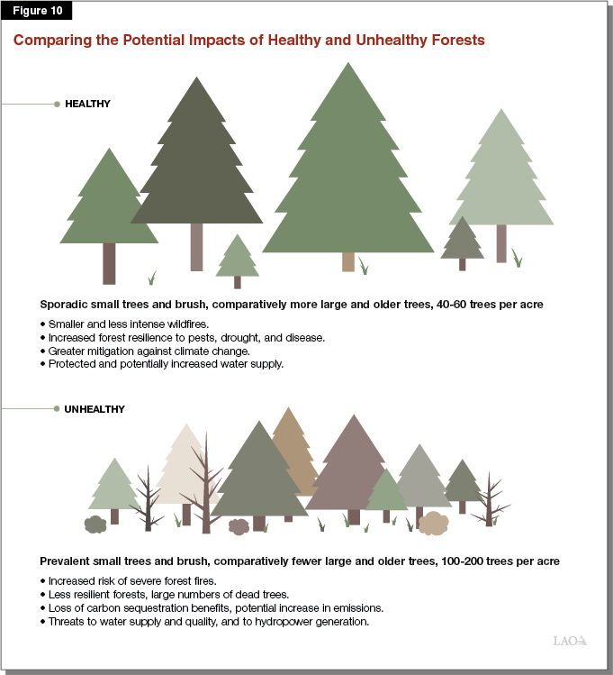 Figure 10 - Comparing the Potential Impacts of Unhealthy and Healthy Forests