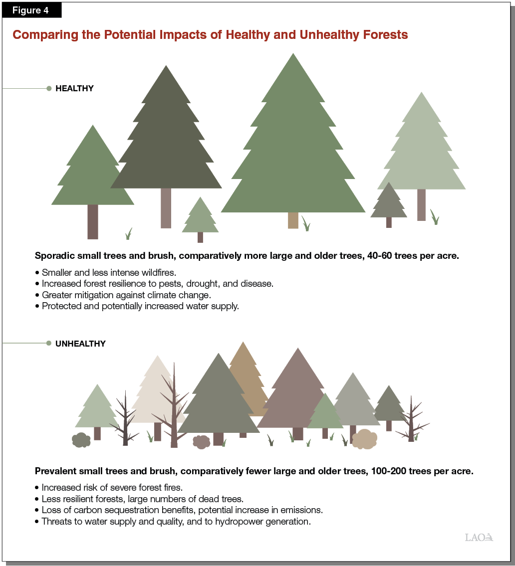 Figure 4 - Comparing the Potential Impacts of Unhealthy and Healthy Forests